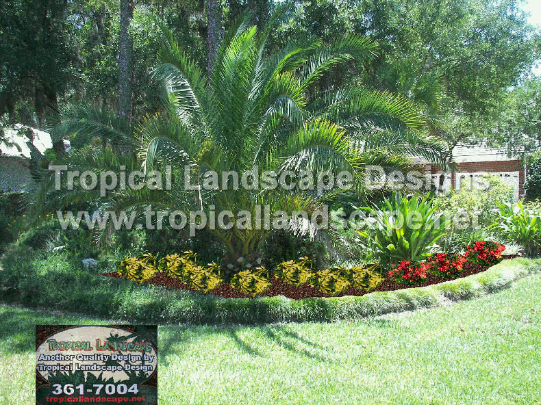 Tropical landscaping designs of tampa bay for Tropical garden designs